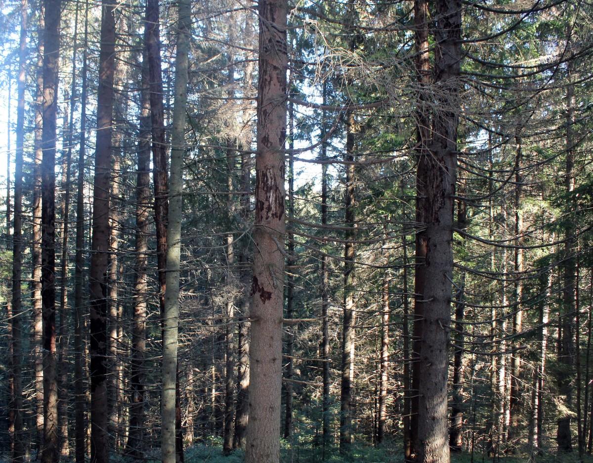 Штете – осушена стабла у Рутавцима, на левој обали Тисовице