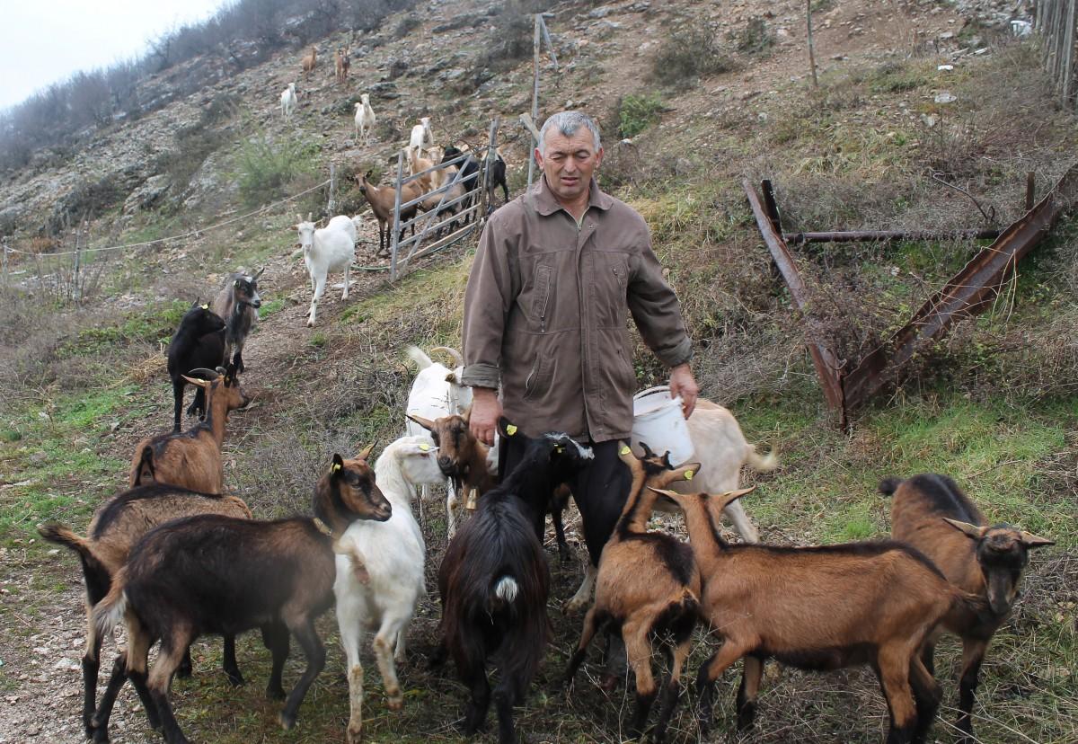 Купци јарића и козјег сира долазе им на ноге