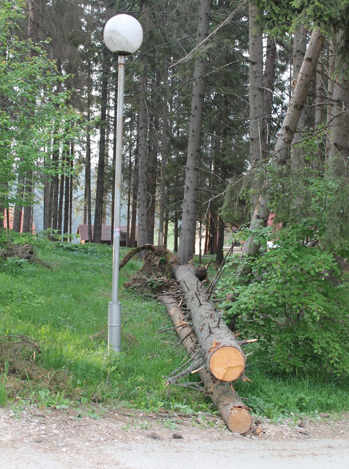 Изваљена стабла чекају дрвосече и инспекцију