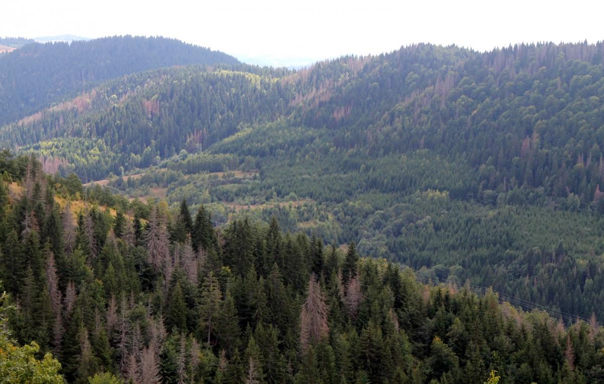 Лошe газдовање највећим благом нашег краја – шумски комплекс Смудиноге