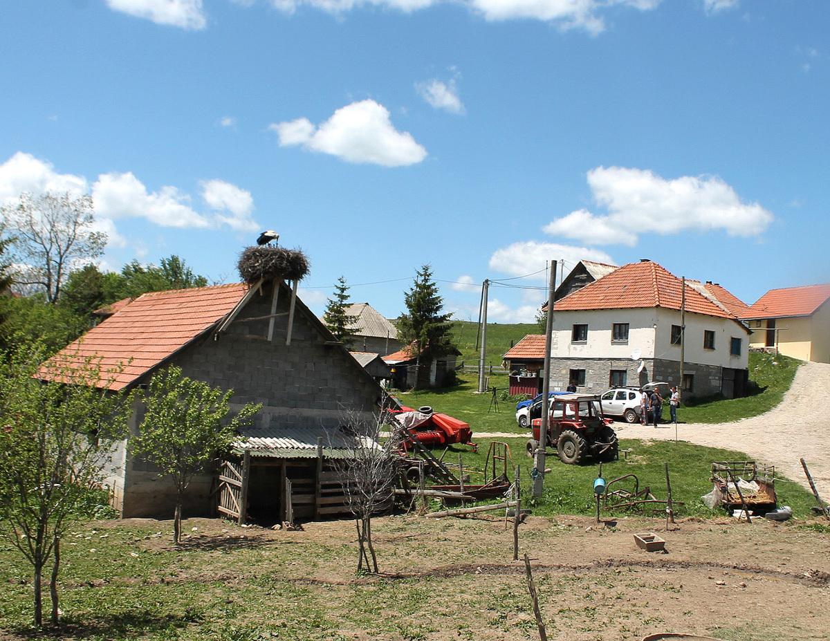 Једно гнездо у читавом крају - у дворишту Иванковића