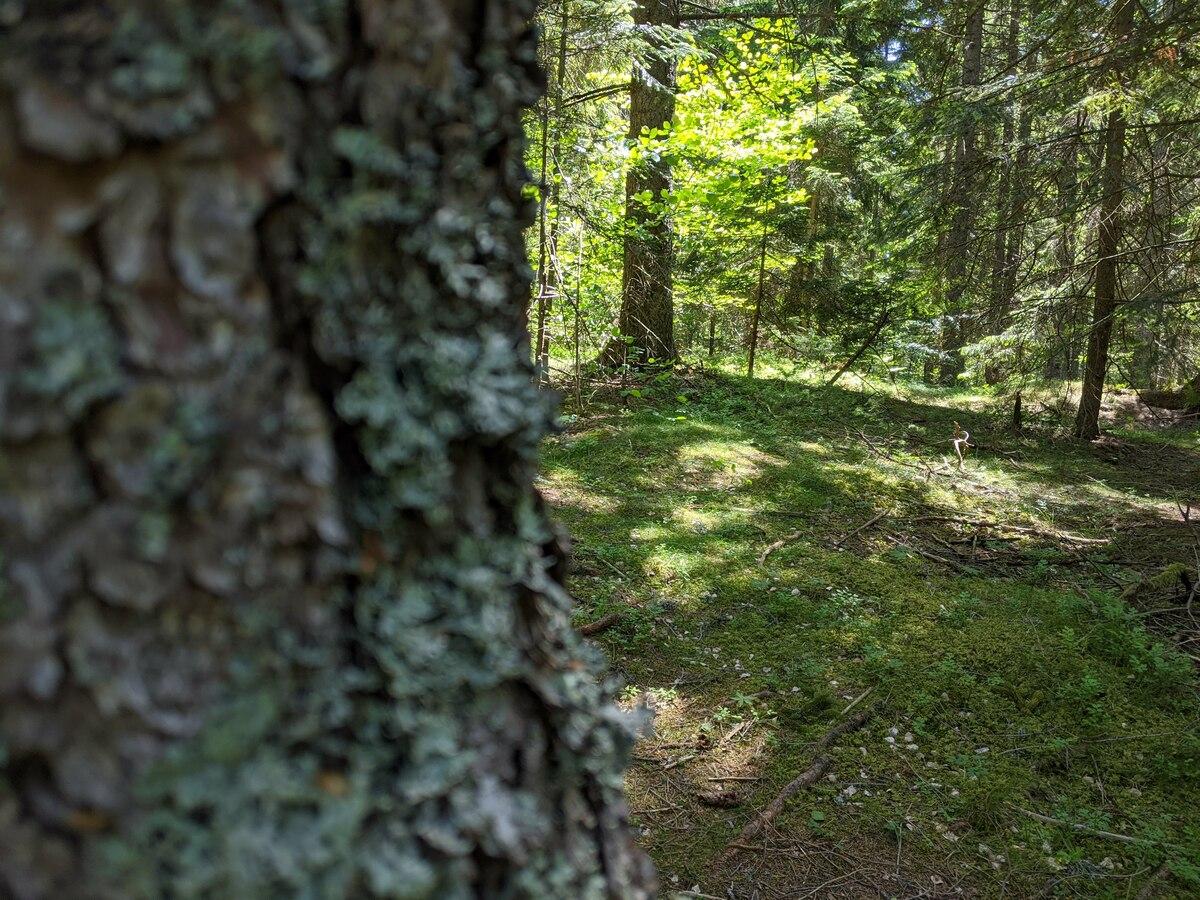 Златарска шума