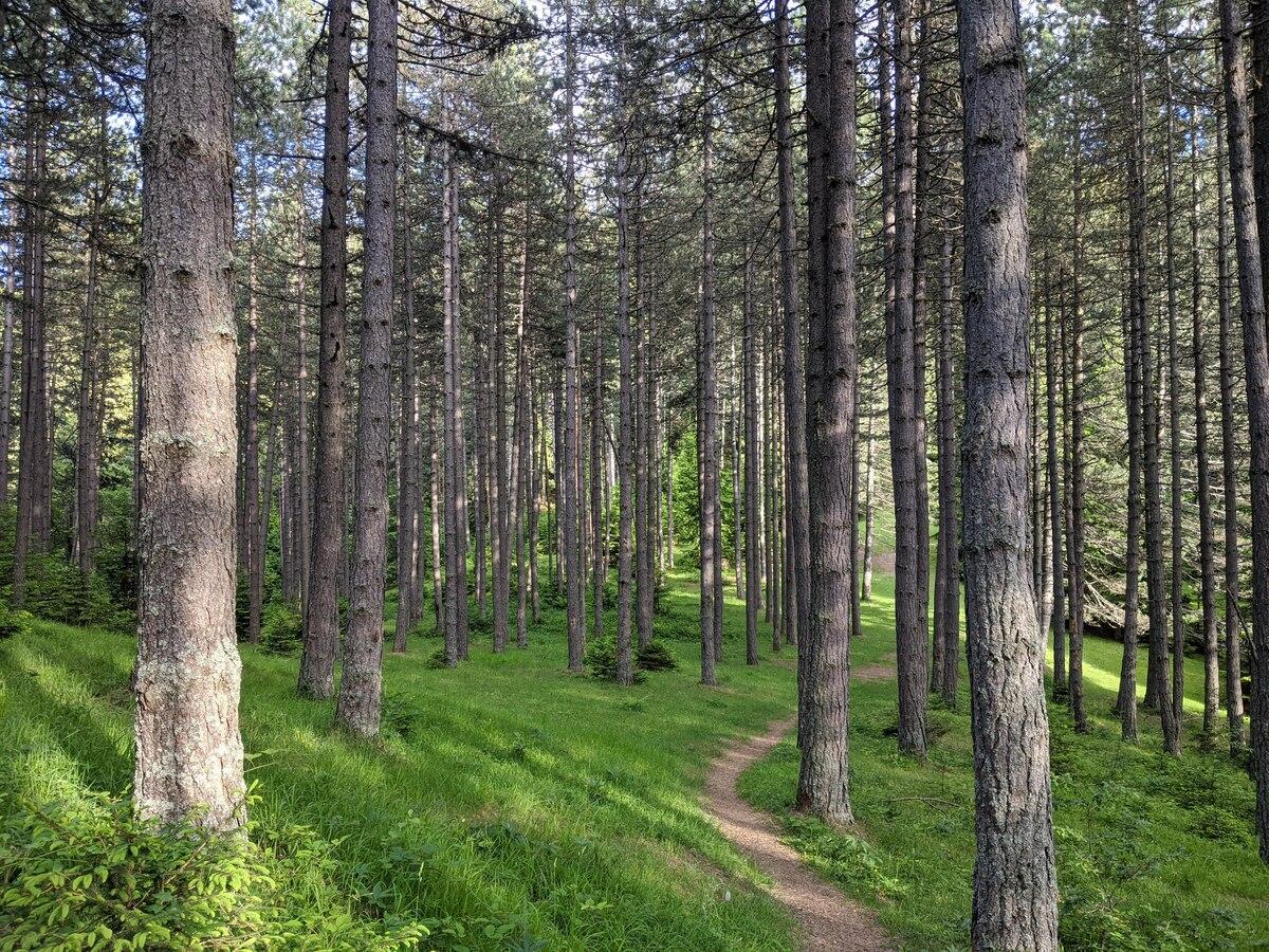 Златарска шума Природа Касарна Шопот
