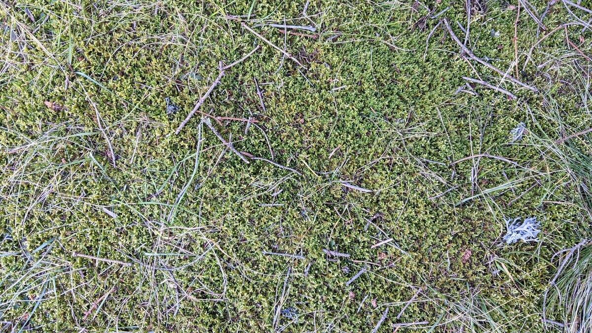 Tepih od mahovine Jesen na Zlataru