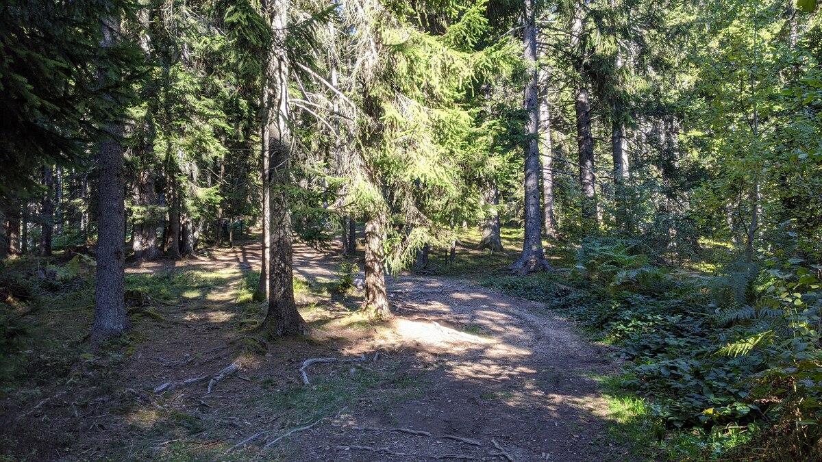 Put kroz šumu prema vidikovcu Vidikovac Zlatar